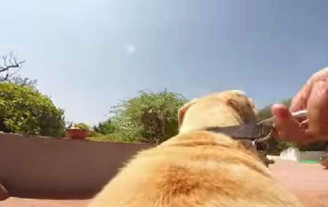 فرحة كبيرة لكلب بالحرية