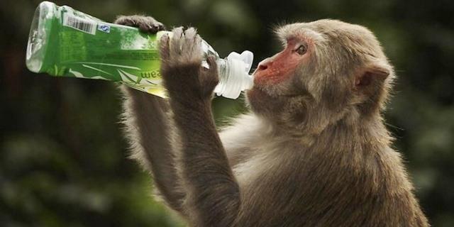لقاح تجريبي لإيبولا يحمي القرود 10 أشهر