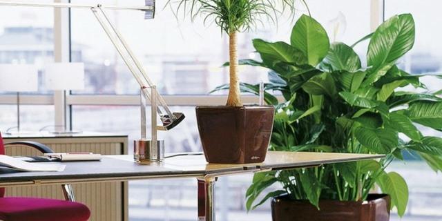 النباتات في المكاتب ترفع إنتاجية العمل