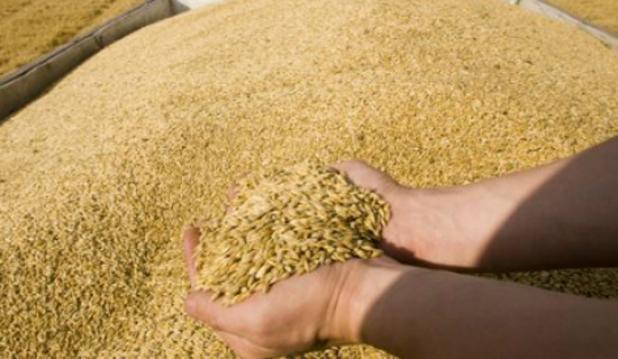 8 آلاف قنطار من القمح المستورد في المزبلة ببومرداس الجزائرية