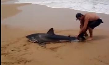 رجل ينقذ سمكة قرش