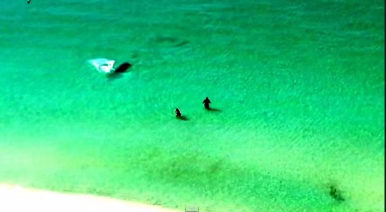 شاهد كيف يسبح قرش ضخم بالقرب من هذين الزوجين