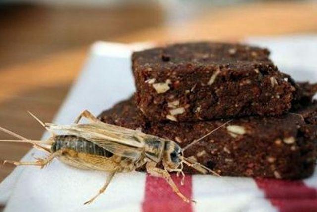 بسكوت الصراصير أحدث صيحات التغذية المثالية