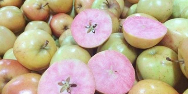 هل شاهدت تفاحاً قشرته برتقالية وداخله وردي؟