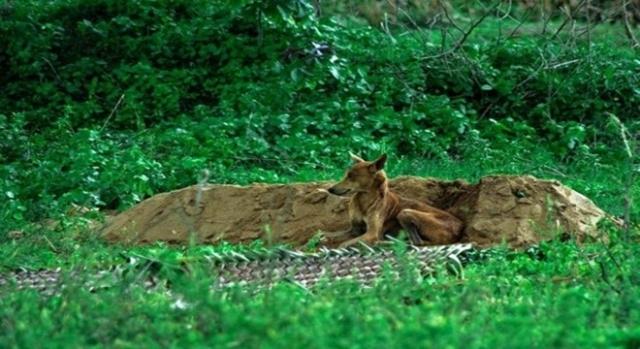 كلب يلازم قبر صاحبه أسبوعين بلا طعام