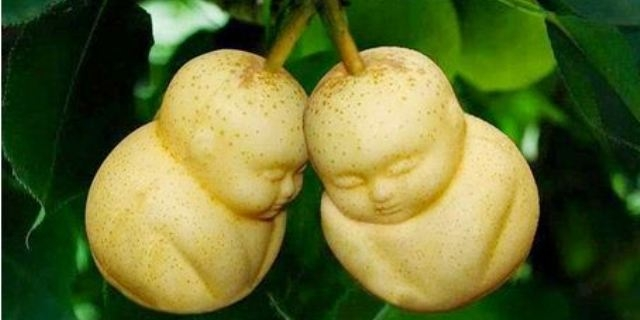 «طباعة الفاكهة» موضة صينية اكتسحت العالم