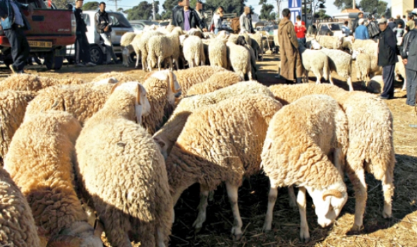 أسابيع قبل العيد..المصالح البيطرية بالجزائر متخوفة من فتح الأسواق