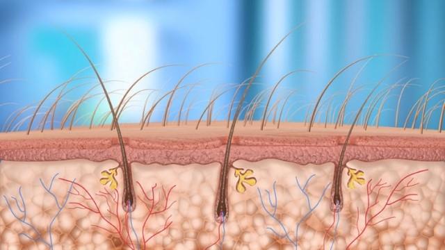 باحثون يكشفون عن هلام لإنماء الشعر