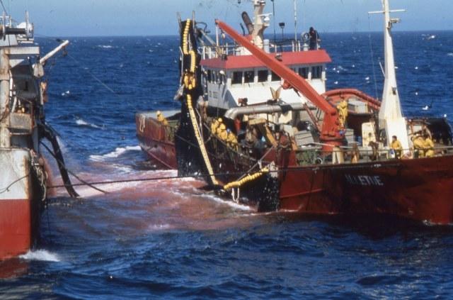 120سفينة صيد أوروبية تعود إلى المياه الإقليمية للمغرب بموجب الاتفاق مع الاتحاد الأوروبي