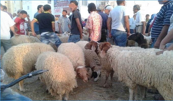 تونس ..العلوش بألف دينار ودعوات مجتمعية لمقاطعة العيد
