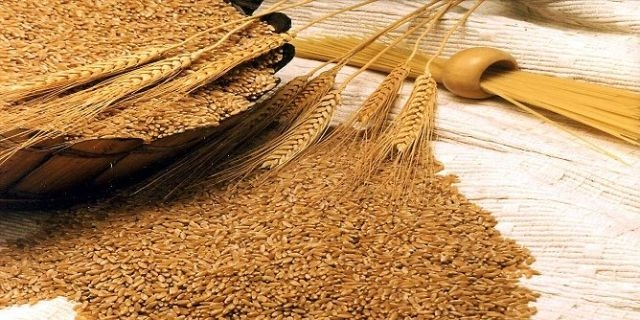 المغرب يشترى تسعة آلاف طن من القمح اللين الأمريكي