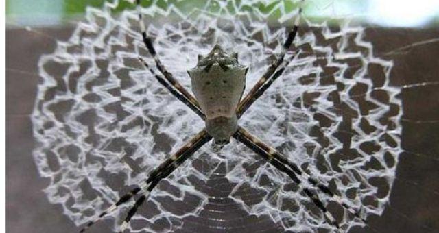 تصاميم مذهلة وأشكال معقدة لشبكات العنكبوت تحير العلماء