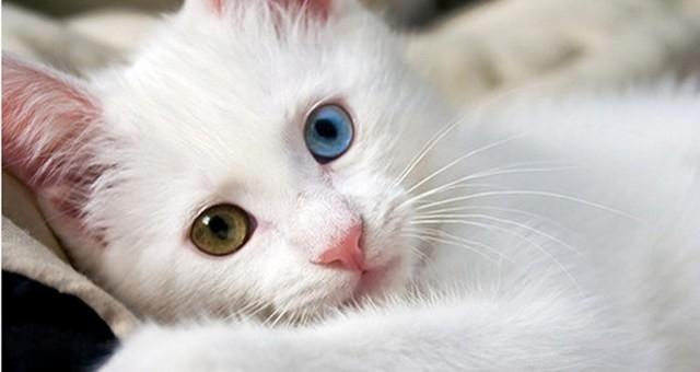 تعرف على حقيقة امتلاك «القطط» لـ