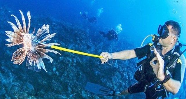 بالصور.. غواص شجاع يطعم أسماك القرش بيده