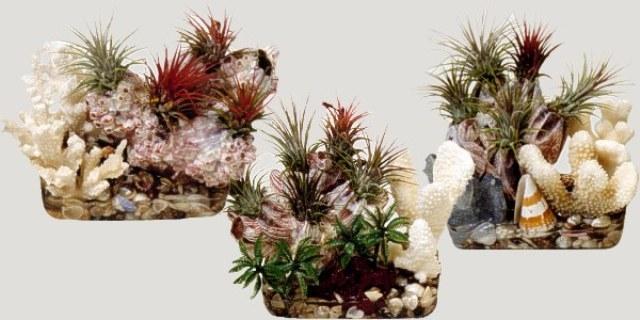 أهم النباتات المزهرة لتزيين البيت من الداخل
