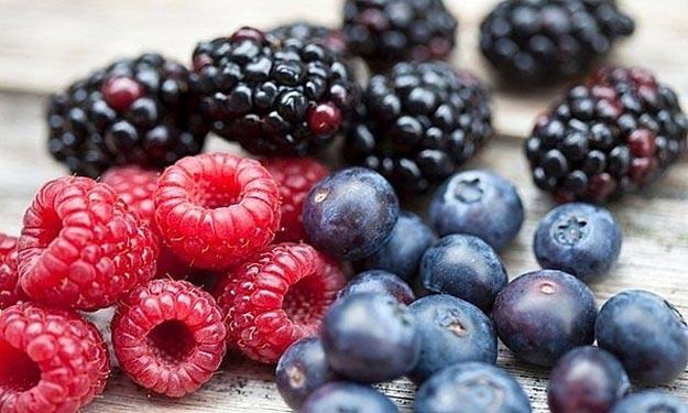 فوائد التوت البري في علاج سرطان البنكرياس