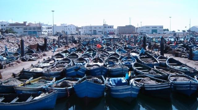 حجز كميات هامة من المعدات المستعملة في الصيد غير المشروع للأخطبوط بميناء أكادير