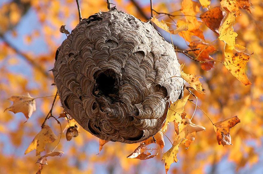animal-architecture-nests1-1