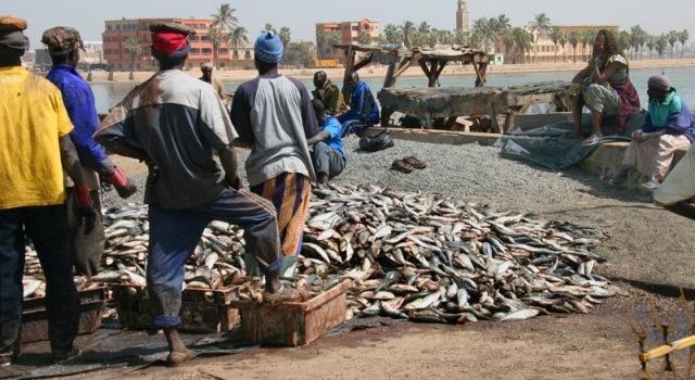 شركة صينية  تحتكر الصيد البحري بنواذيبو.. والنقابيون والسياسيون يحتجون