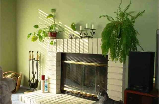 أهم النصائح لتنسيق النباتات داخل المنزل