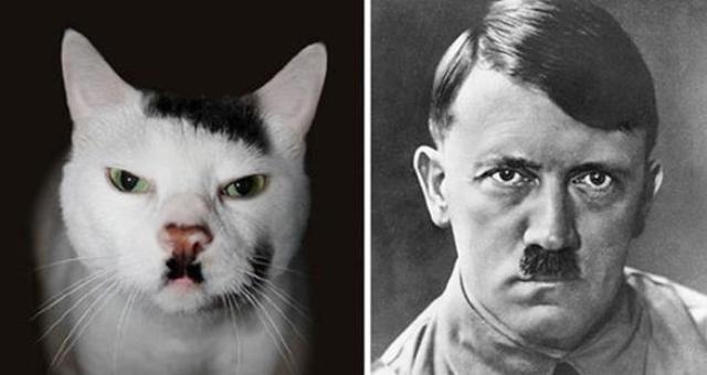 بالصور: مشاهير يعثرون على توائمهم.. في القطط