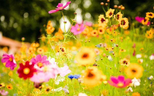 تعرفوا على فوائد وحسنات الأزهار الصحية