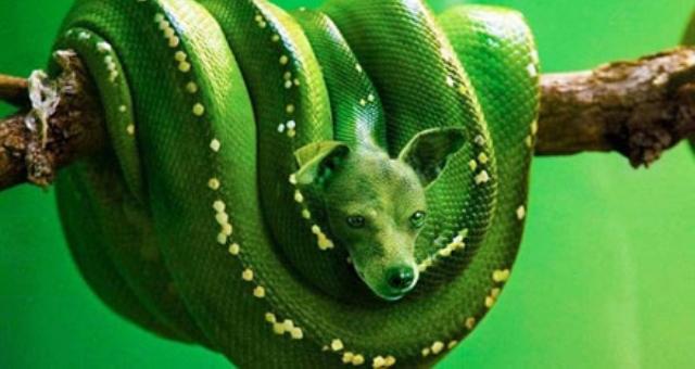 بالصور.. حيوانات مرعبة باستخدام برنامج «فوتو شوب»