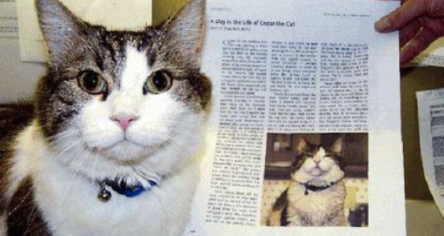 «أوسكار» القط الذي يشم رائحة الموت