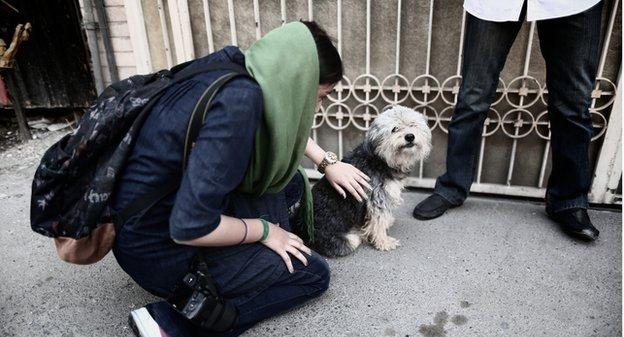 إيران: عقوبات قاسية قد تلحق بمالكي الكلاب