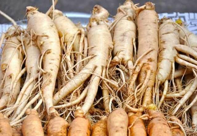 أهم الفوائد الصحية لنبات الجينسينغ