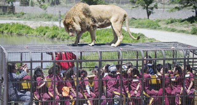بالصور: حديقة فريدة من نوعها تحبس الزوار بدلاً من الحيوانات