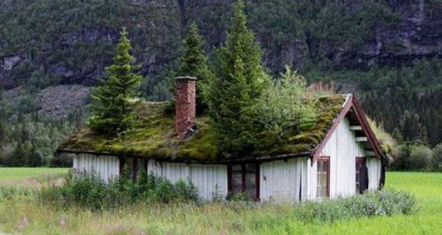 «الأسقف الخضراء» تقليد نرويجي للحفاظ على البيئة