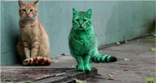 بالفيديو.. قط أخضر زمردي غريب يظهر في شوارع بلغاريا