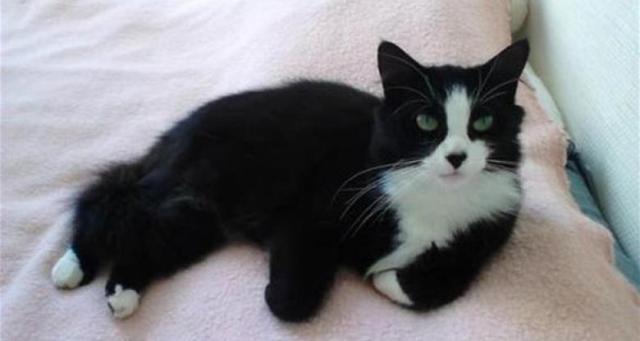 قطة تقطع ألف كيلومتر سيراً بحثاً عن صاحبتها