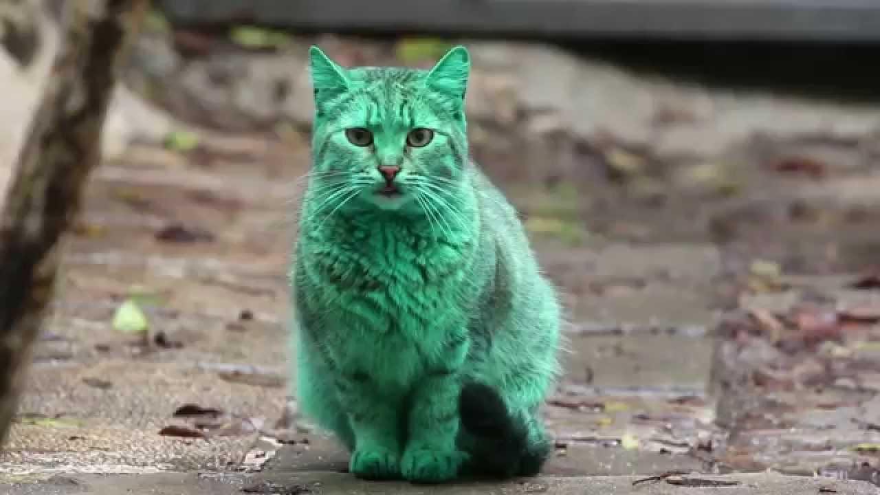 قط أخضر في بلغاريا يحدث ضجة