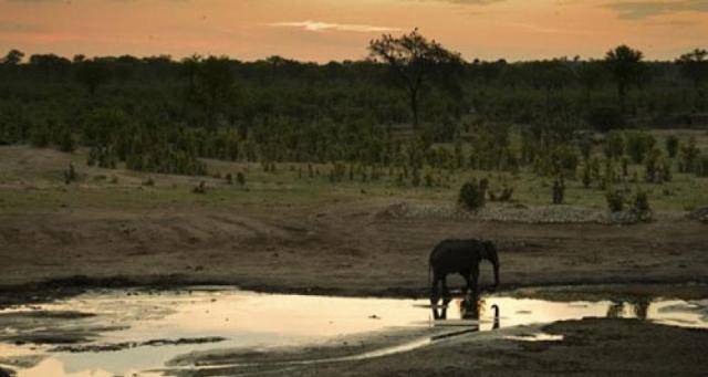 زيمبابوي تصدر الفيلة لعدم القدرة على رعايتها