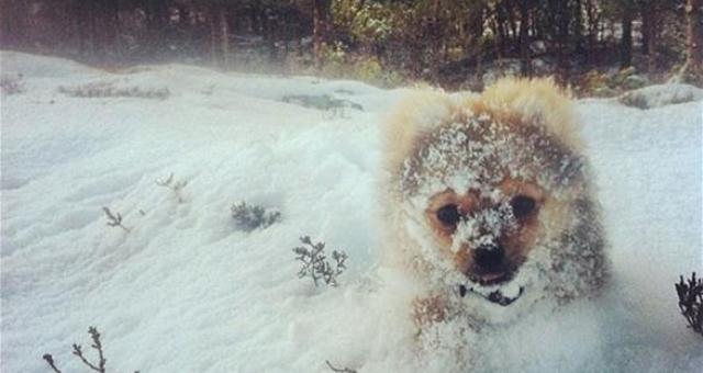 بالصور: حيوانات لطيفة تلعب في الثلج للمرة الأولى