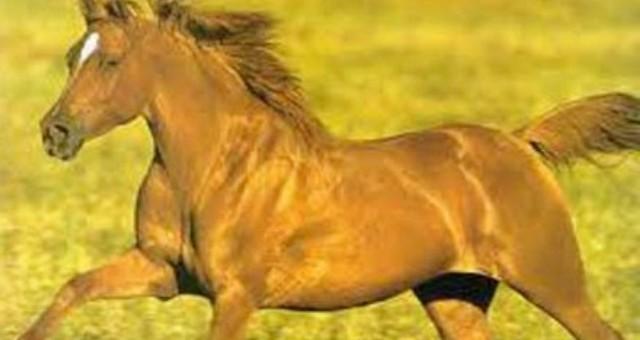 بالفيديو .. حصان يطير لبضع ثوانٍ
