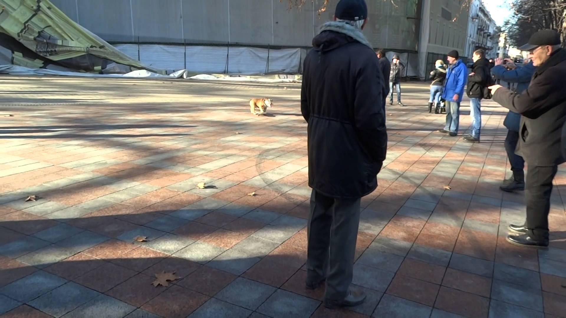 كلب على مزلاج يريد تفريق مظاهرة