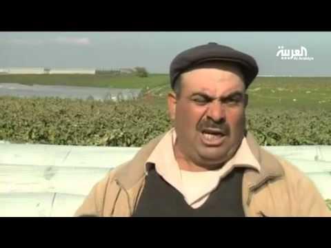 الصقيع يتلف المحاصيل الزراعية بفلسطين