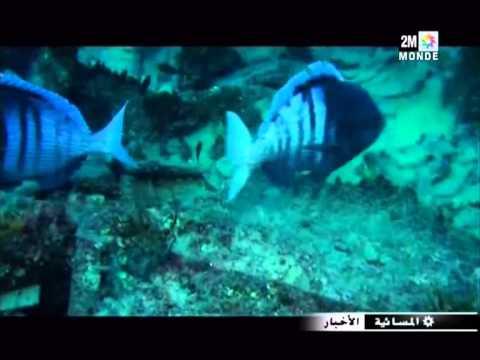بناء أكبر حوض للسمك في مدينة الدار البيضاء