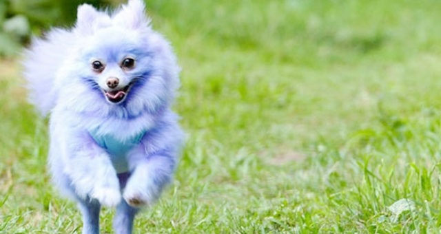 6 آلاف جنيه إسترليني يكسبها كلب سنويا