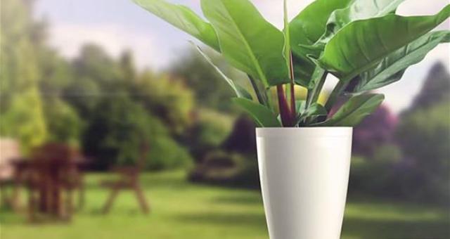 مزهرية ذكية تعتني بالنباتات وتسقيها تلقائياً