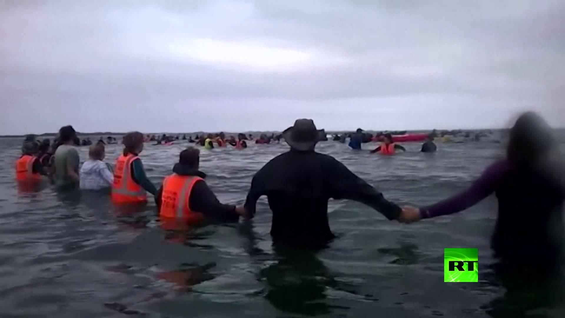 200 دلفين تخرج إلى الشاطئ