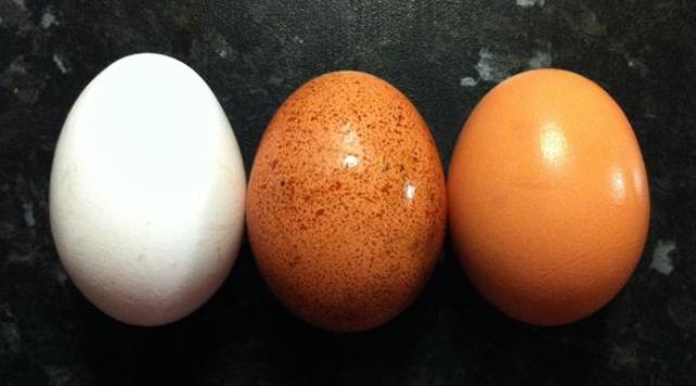البيض والجبن بريئان من أمراض القلب