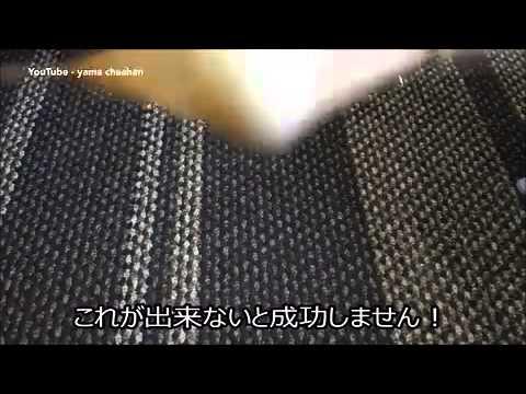 بالفيديو: طريقة جديدة لسلق البيض تقلب لونيه