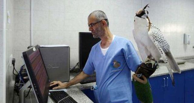 مستشفى 5 نجوم للصقور في أبوظبي