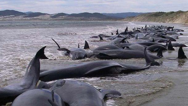 200 دلفين تلقي بنفسها إلى الشاطئ في نيوزيلند