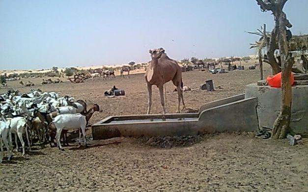 حزب معارض يُحذر من  عام الجفاف في موريتانيا