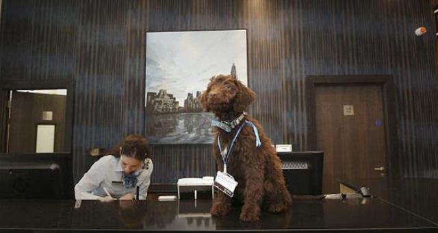 بالصور: فندق يوظف كلباً لاستقبال الزبائن